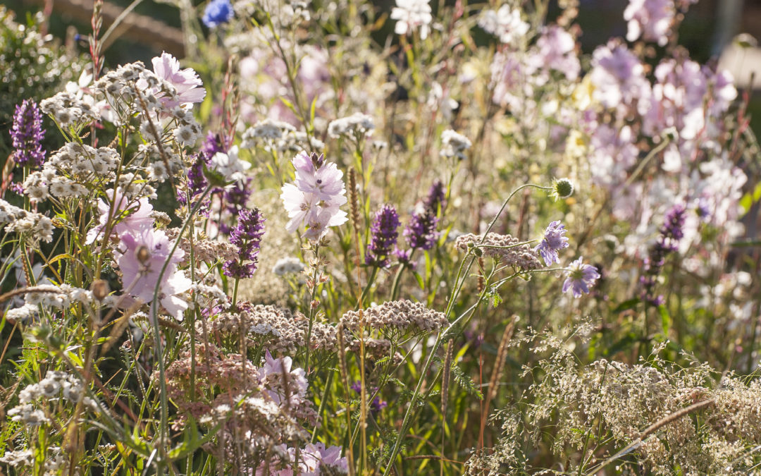 RHS Tatton Plant List
